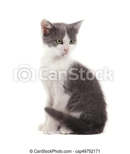 https www canstockphoto fr mignon gris chaton isol c3 a9 fond petit 49752171 html