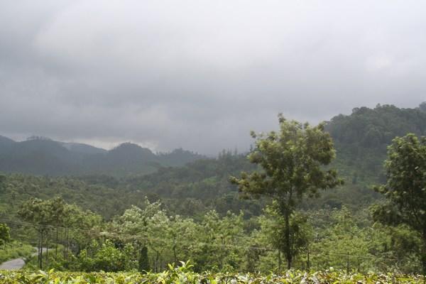 Cardamom-Hills