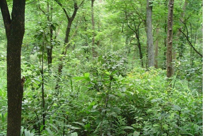 https://i2.wp.com/cdn.walkthroughindia.com/wp-content/uploads/2012/10/Dense-Forest-North-East.jpg