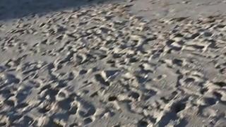 Beach blonde in bikini anal bangs thumb