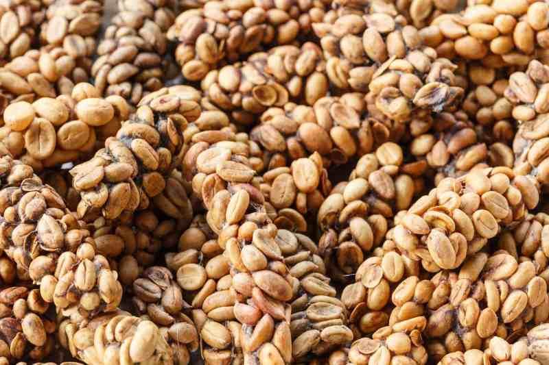 En Pahalı Kahveler - Kopi Luwak