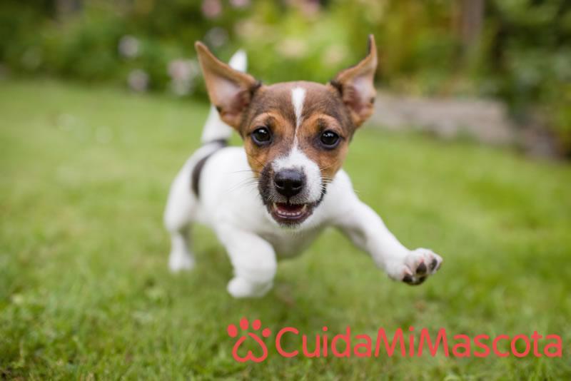 Encuentra al cuidador ideal para tu mascota en CuidaMiMascota - cuidamimascota