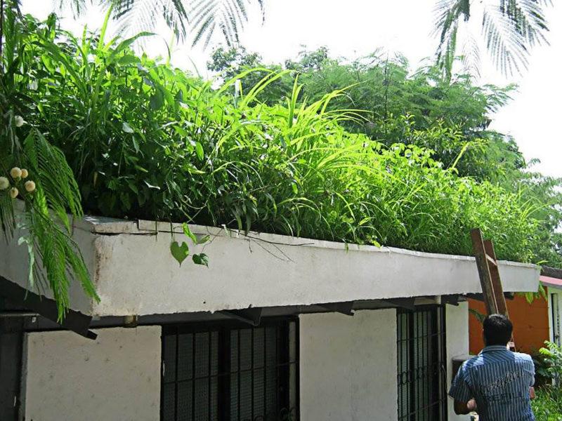 Crean techos verdes que disminuyen temperatura de las casas en zonas de extremo calor - techos-verdes-2-800x600
