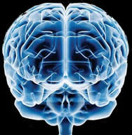 Mitos y verdades del cerebro - cerebro
