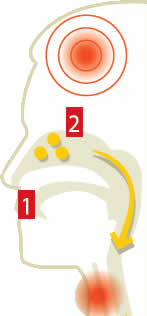 formas ataque influenza porcina Influenza porcina, sintomas, mitos y formas de atacar