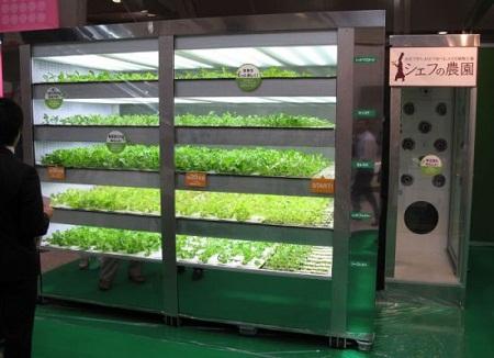 Máquina capaz de producir lechuga sin luz solar - Maquina-capaz-de-producir-lechuga-sin-luz-solar