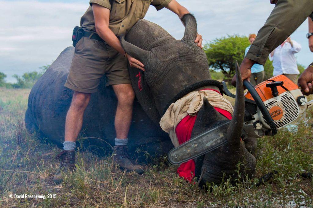 Anuncian los ganadores del primer concurso de fotografía de conservación - david-rosenzweig