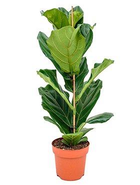 Planten voor in huis