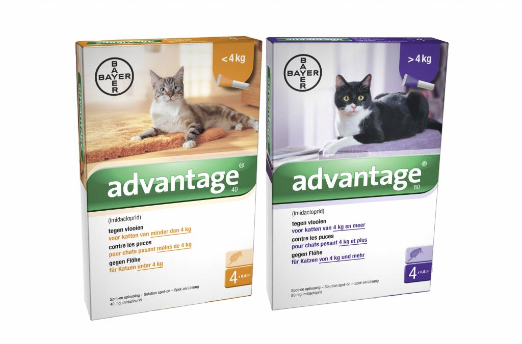 Advantage Katze Spot On Behandlung Von Flohe Bei Katzen Petduka Petduka De