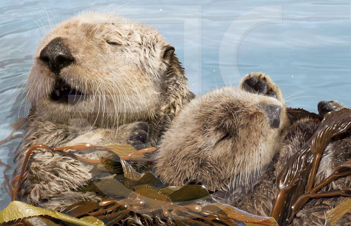 Aquatic Wildlife