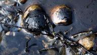 طرق استخدام قطران الفحم الحجري موسوعة وزي وزي