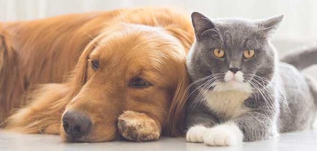 موضوع تعبير عن الحيوانات الأليفة موسوعة وزي وزي