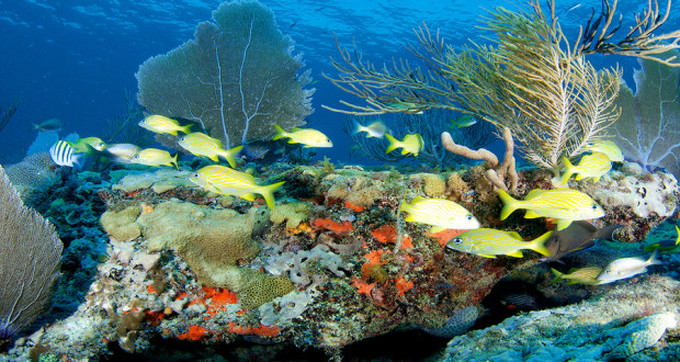 Local fish species, inhabiting Biscayne Bay National Park's coral reefs