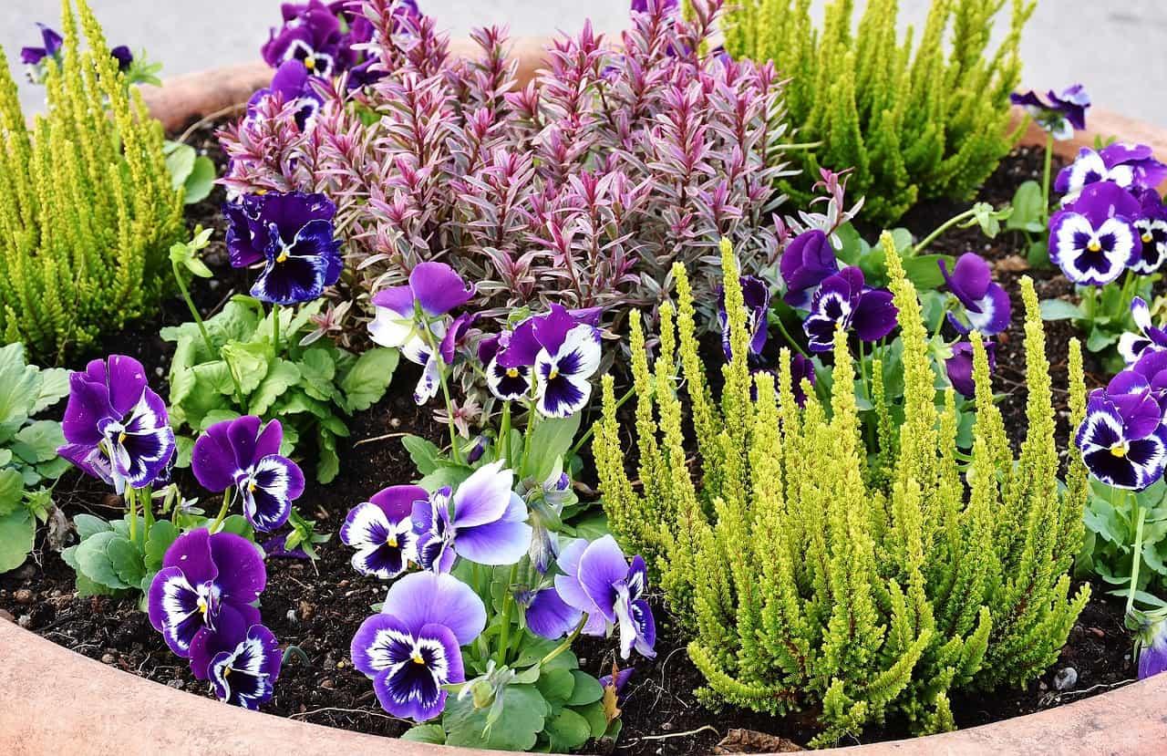 Best Garden Design Programme