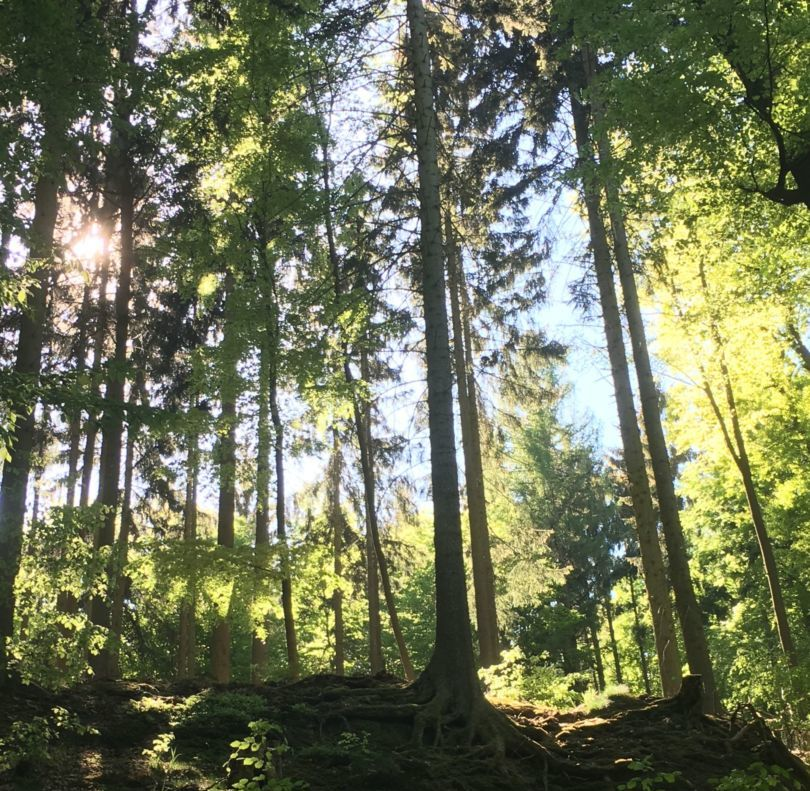 Nadelwald Thüringen Brennholz der Zukunft