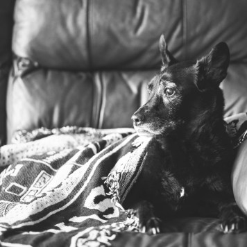 seattle-lifestyle-pet-photographer-010