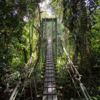 Sarawak's Mulu Rainforest is Being Threatened by An Oil Palm Plantation, Here's How You Can Help; Tara Thiagarajan; World Of Buzz