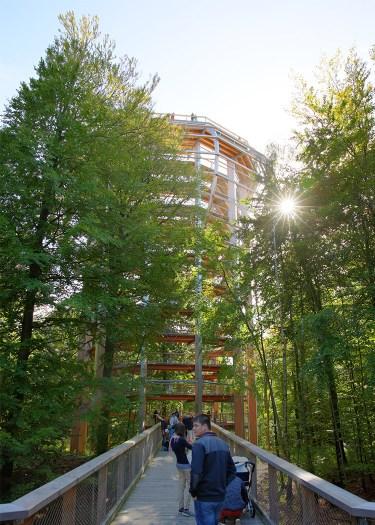 """Der """"Adlerhorst"""" von Unten - Baumwipfelpfad Naturerbe Rügen"""