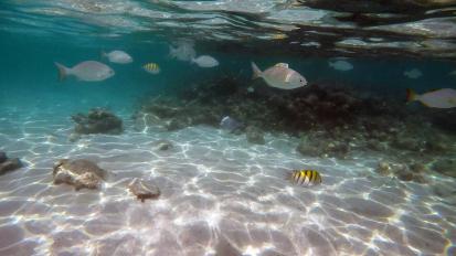 Unterwasserwelt am Hotelstrand