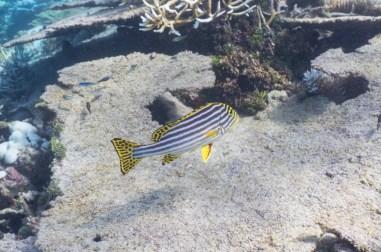 leica-x-u-113-unterwasser-14