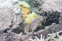 leica-x-u-113-unterwasser-19