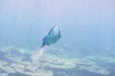 leica-x-u-113-unterwasser-3