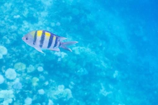 leica-x-u-113-unterwasser-5