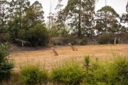 Orana Wildlife Park - Giraffe