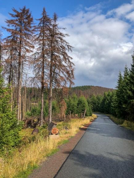 Die ersten drei Kilometer ging es bergab auf der asphaltierten Brockenstraße