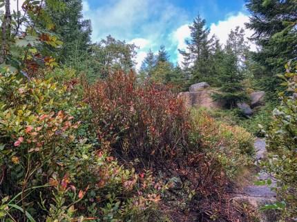 Wanderung Brocken - Rote Punkt Weg mit Felsformation