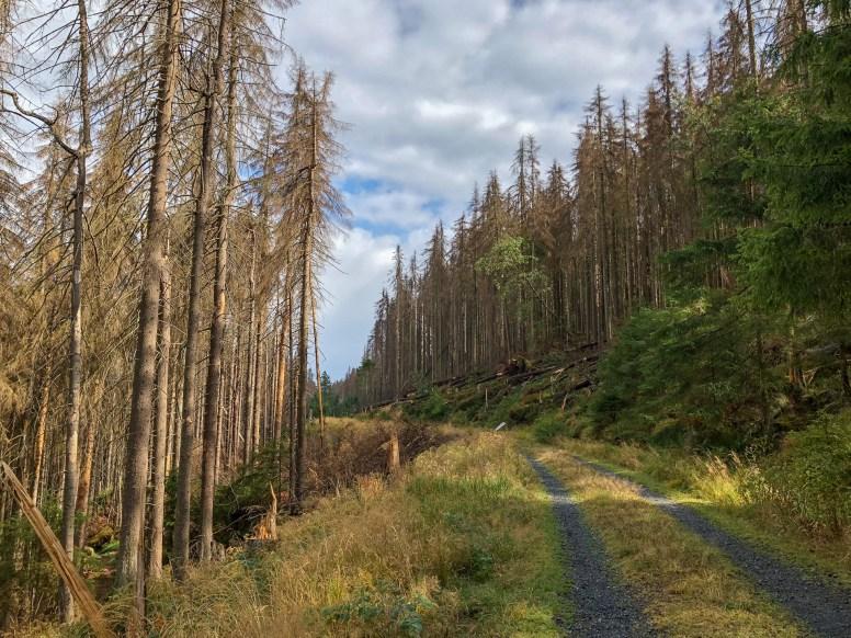 Wanderung Brocken - Forstmeyer-Sietz-Weg