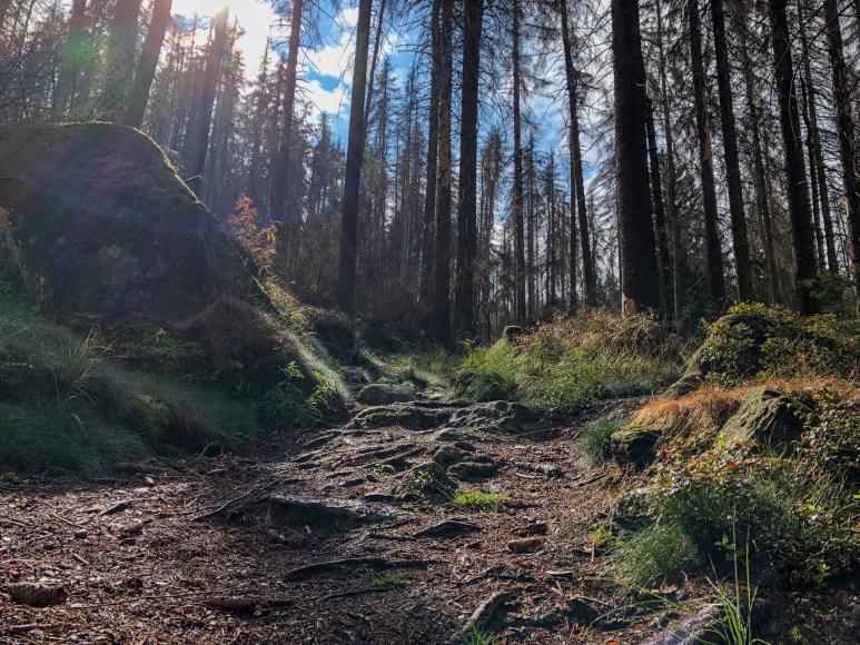 Wurzeln, Gräser, Moose und Steine bedecken den Boden des Höllenstiegs