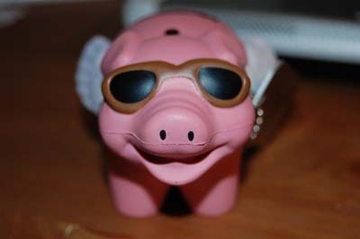 Baby flying pig travel bug is preparing for a journey