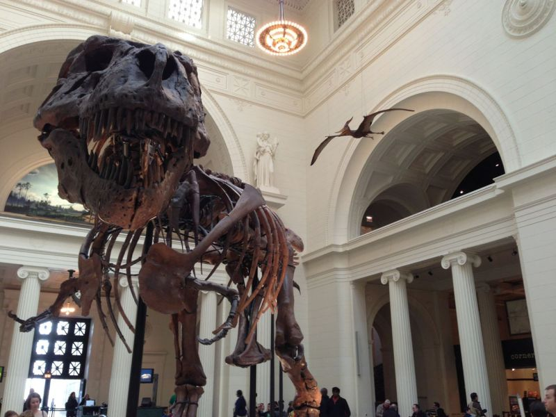 T.Rex at the Chicago Field Musem