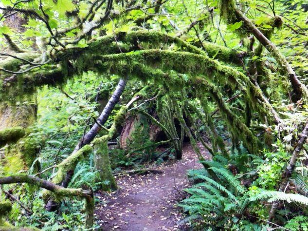 Mossy arch