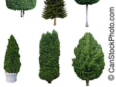 sträucher bilder mit namen satz, blätter, bäume, grün, sträucher, namen. satz, blätter