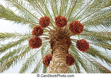 date palm fruit benefits