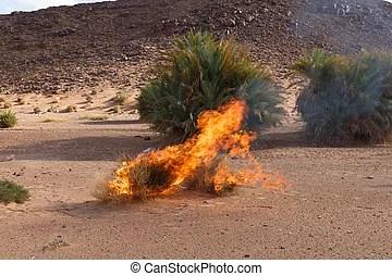 burning bush strauch # 83