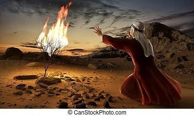 burning bush strauch # 19