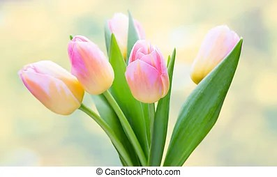 Tulip shiny flowers on the colorful background with bokeh  Spring flowers  Tulip bouquet on the bokeh background