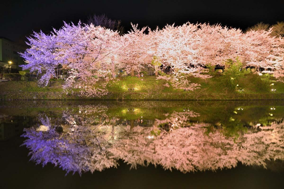 「舞鶴公園」の画像検索結果