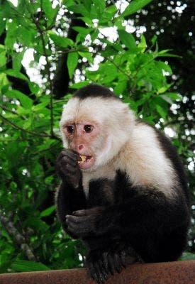prostitute monkey