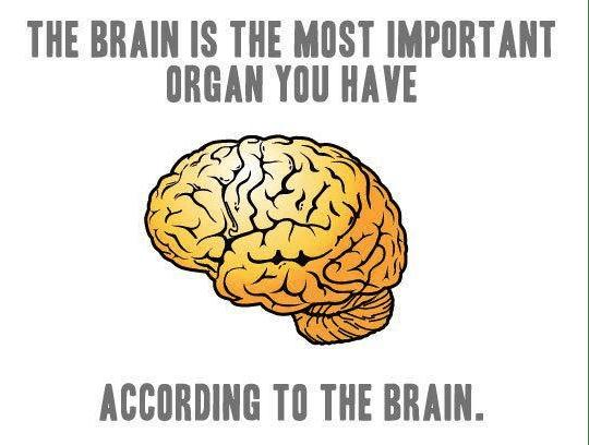 Image result for brain joke