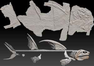 """The 300 million-year-old """"Godzilla Shark"""" from New Mexico has finally been given an official name"""