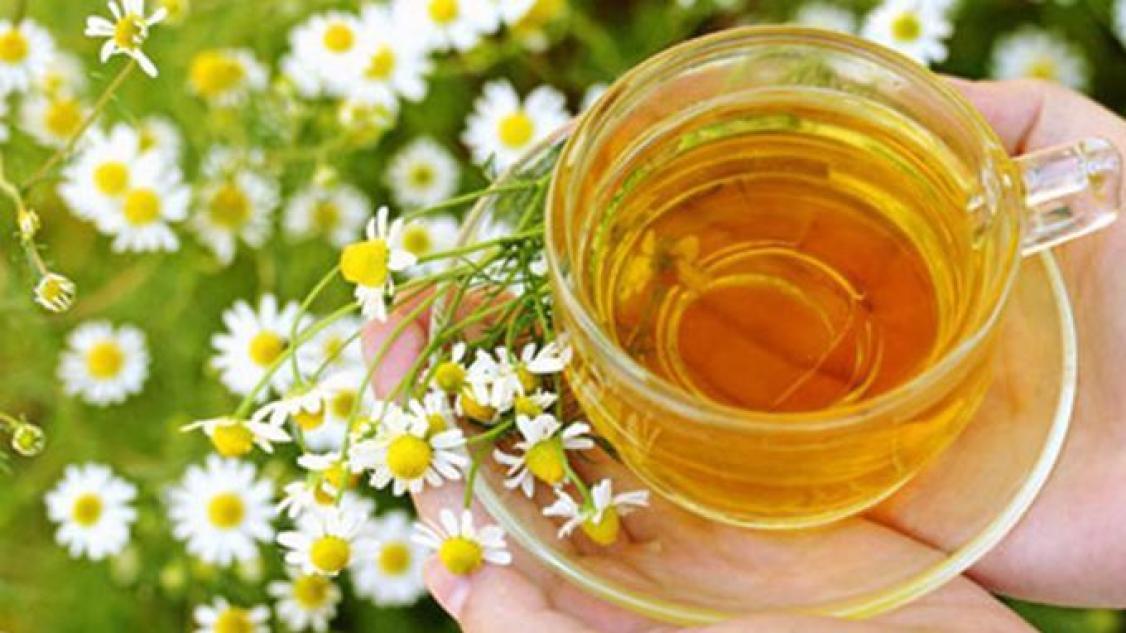 Hasil gambar untuk Minum Teh Kamomil (Chamomile Tea)