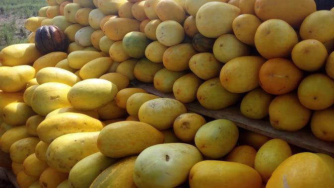Tumpukan buah timun suri kembali menyapa masyarakat Garut pada momen Ramadan tahun ini (Liputan6.com/Jayadi Supriadin)