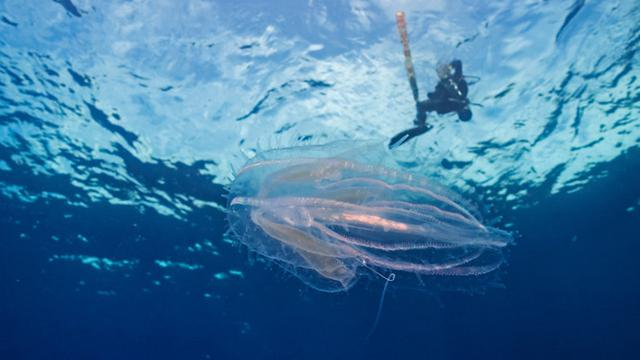 Menyelami Laut Bersama Iringan Para Manta di Manta Point