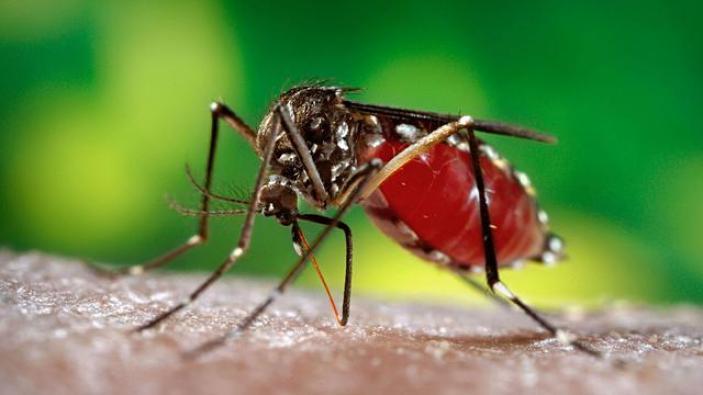 Mengenali Gejala Infeksi Virus Zika - Health Liputan6.com