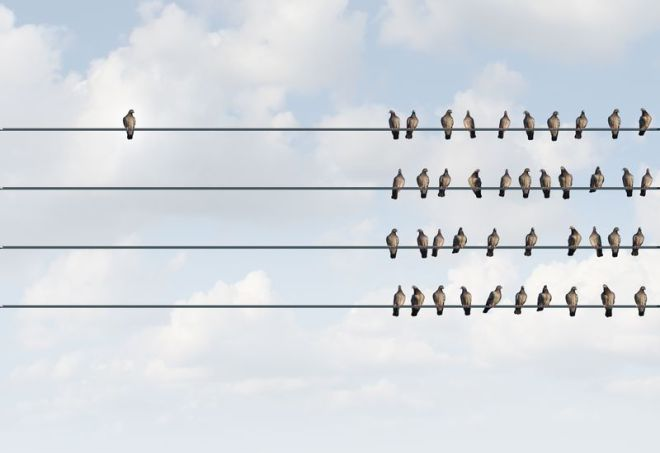 One bird sitting on a wire far away from many other birds