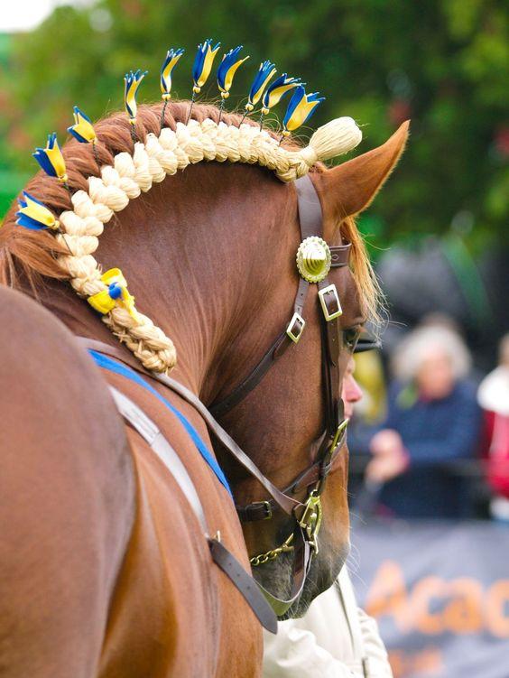 Horse Braids 10 Braided Manes Every Equestrian Will Envy